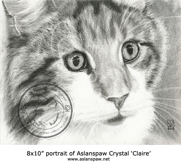 charcoal maine coon portrait by Suzanne Boom