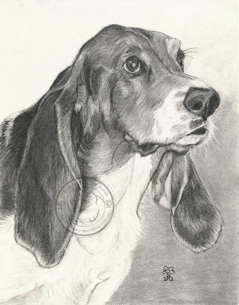 charcoal bassett hound portrait by Suzanne Boom