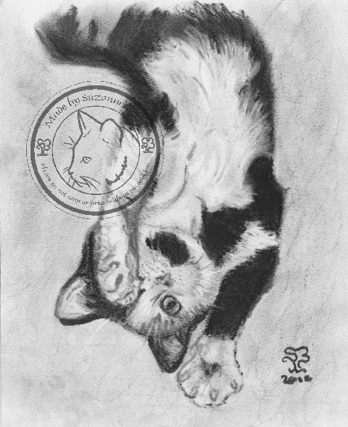 charcoal cat portrait by Suzanne Boom
