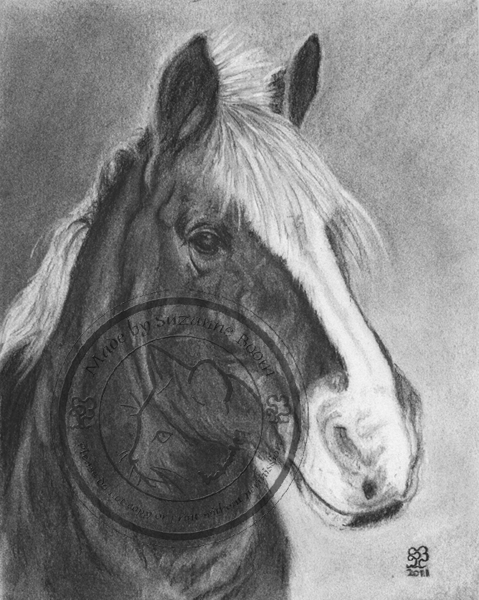 charcoal pony portrait by Suzanne Boom