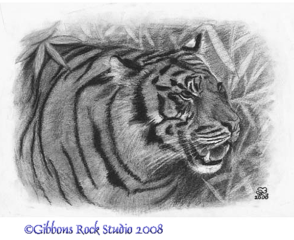 charcoal tiger portrait by Suzanne Boom