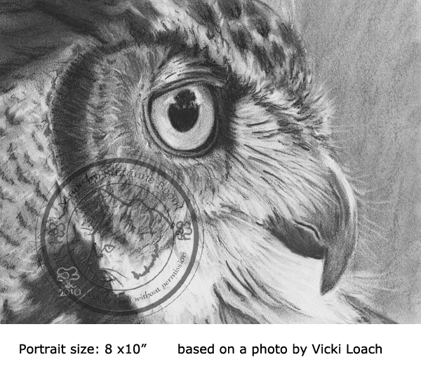 charcoal great horned owl portrait by Suzanne Boom