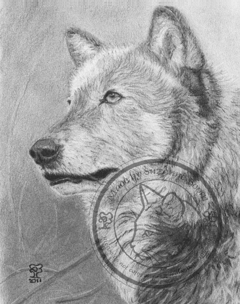 charcoal wolf portrait by Suzanne Boom