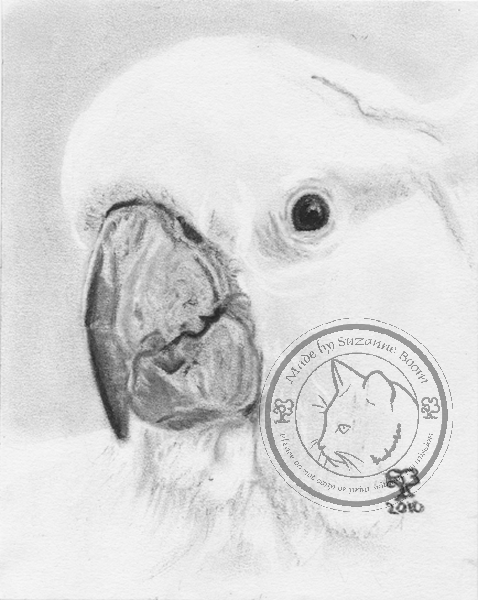 charcoal cockatoo portrait by Suzanne Boom
